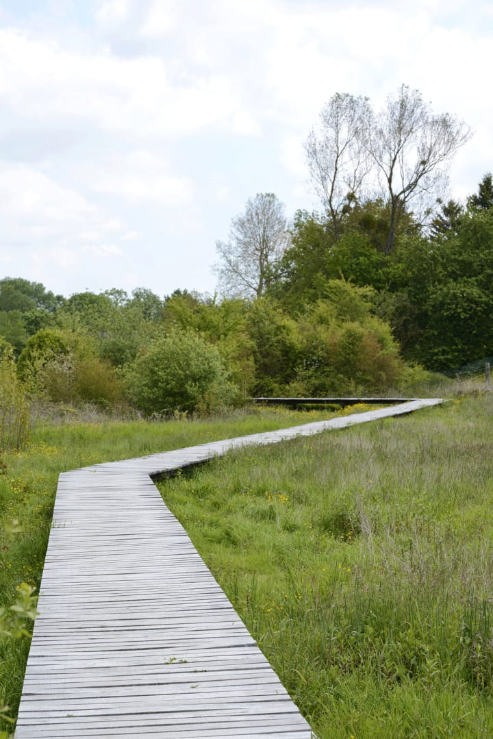 Territoires landscape architects wet meadows and source for Wet garden designs
